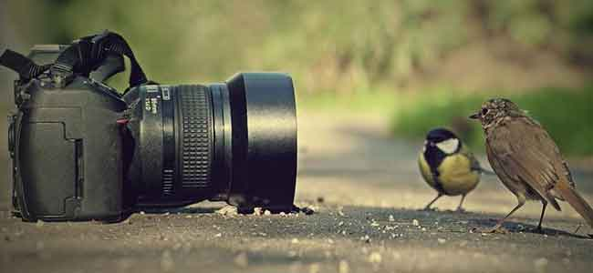 Image result for world photography day